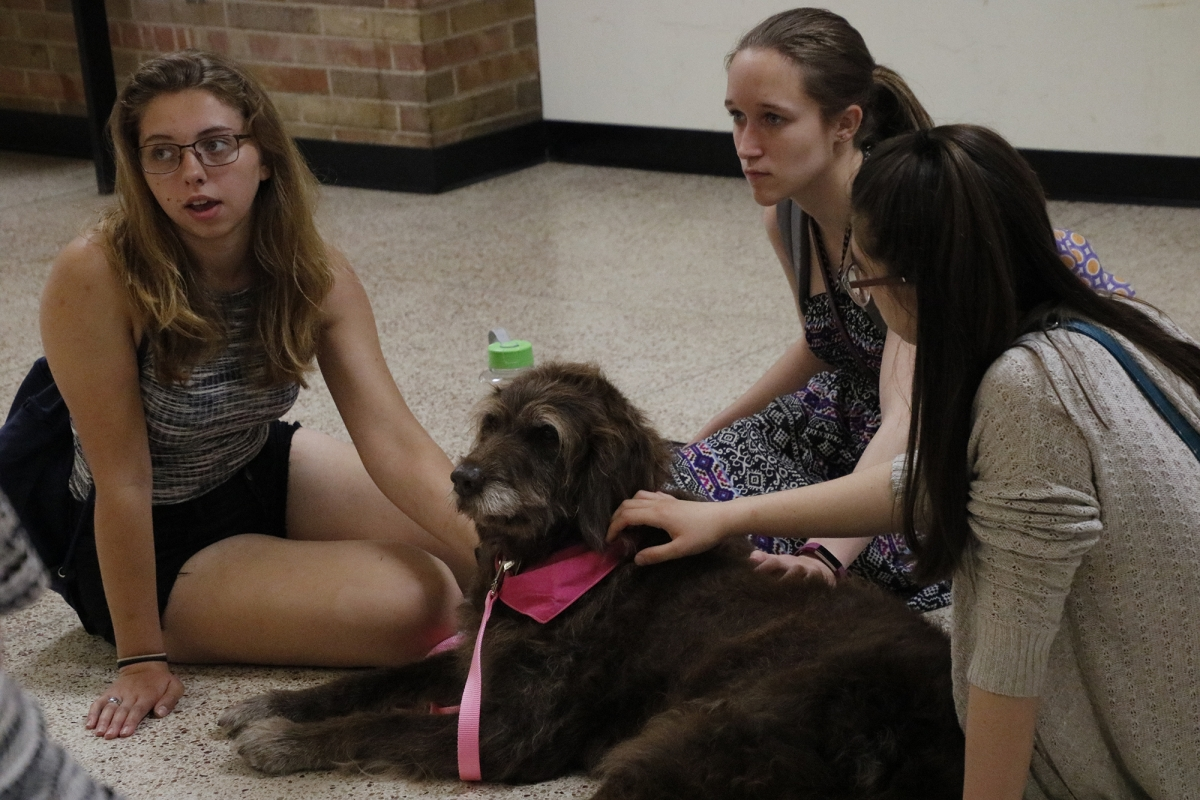 3 students petting dog